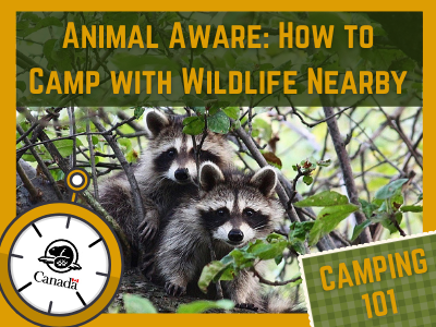 Camping 101 Series: Animal Aware: How to Camp with Wildlife Nearby